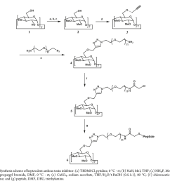structure based design of a heptavalent anthrax toxin inhibitor [ 1545 x 652 Pixel ]