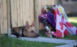 Dogs of murdered soldier Nathan Cirillo