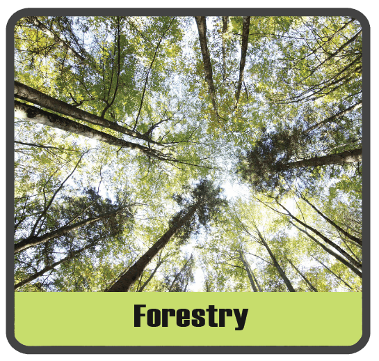 Forestry sector image