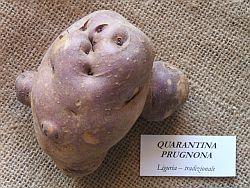 quarantina_prugnona