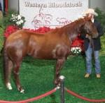 WB Breeders Sale