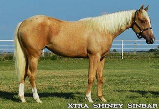 Xtra-Shiney-Sinbar