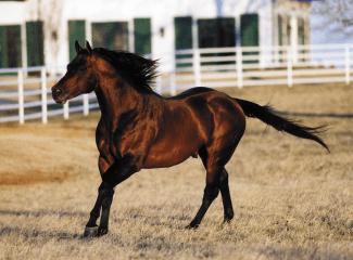 Sire named Gallo Del Cielo running