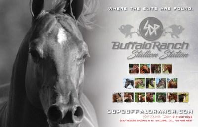 Stallions standing at SDP Buffalo Ranch