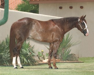 Stallion Smooth As A Cat profile