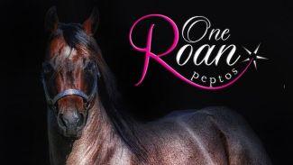 Stallion One Roan Peptos