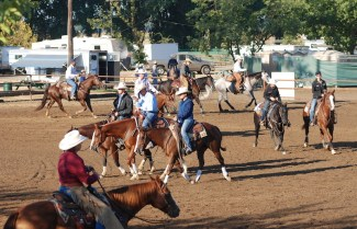 lopers warming up horses before a show
