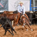 horse chasing cows at West Texas Futurity