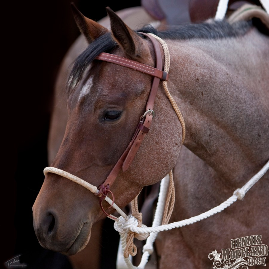 single rope texas-style hackamore with rawhide noseband