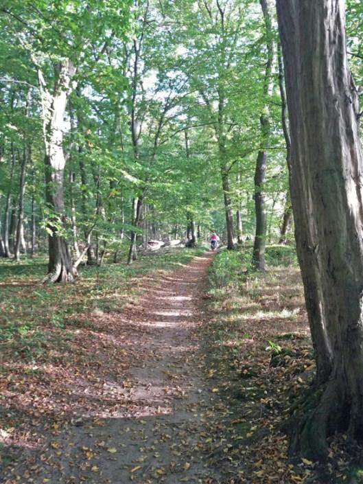Waldpfad-in-Richting-Kaesmuehle