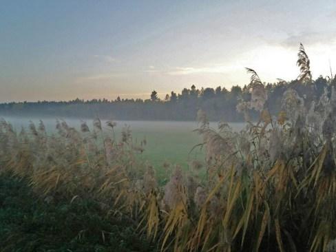 Aufsteigender Nebel bei Altheim