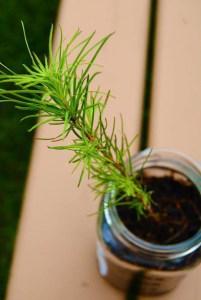 quastuco-silviculture-tree-planting-penticton-photo-contest-entry-15