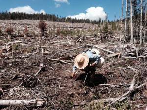 quastuco-tree-planter