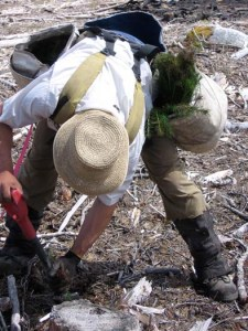 quastuco-tree-planters-okanagan-48