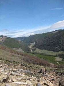 reforestation-quastuco-silviculture-penticton-okanagan-3