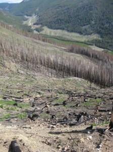 reforestation-quastuco-silviculture-penticton-okanagan-4