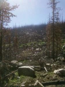 reforestation-quastuco-silviculture-penticton-okanagan-5