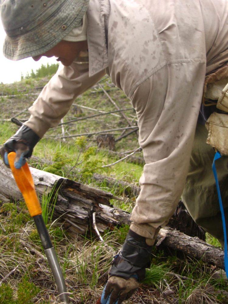 Tree planting in Penticton with Quastuco Silviculture.