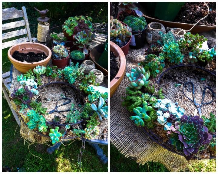 couronne succulentes