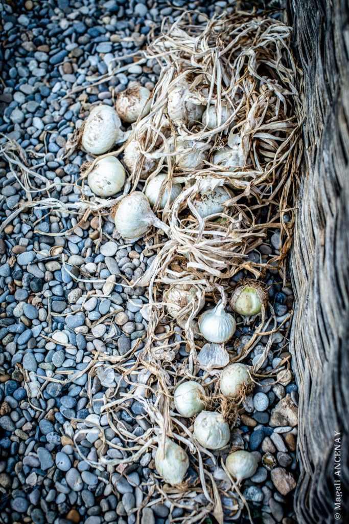 Oignons Blanc de Rébouillon