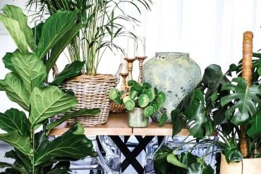 Rempotage des plantes d'intérieur