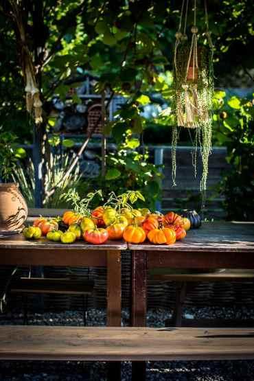 Tomates Bandiwyne Apricot - Magali ANCENAY photographe culinaire