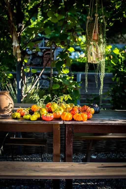Tomates de saison, Bandiwyne Apricot - Magali ANCENAY photographe culinaire