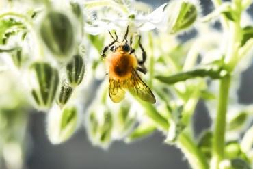 Semaine des fleurs pour les abeilles