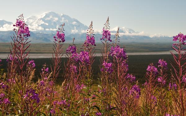 Alaska terre et mer  Qubec Yachting
