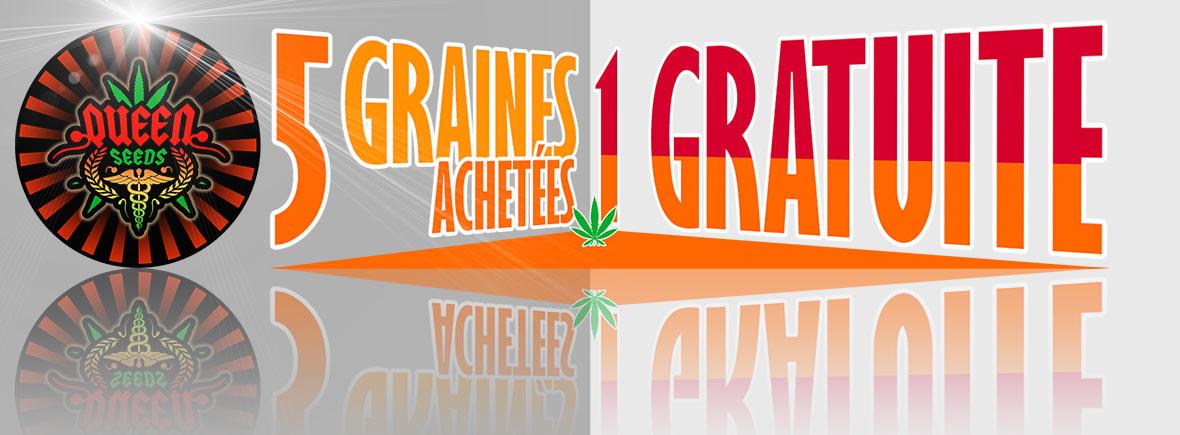 graines cannabis gratuties