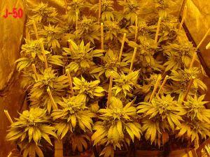 SOG Biotops Growshop