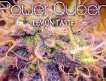 graine de cannabis - power queen