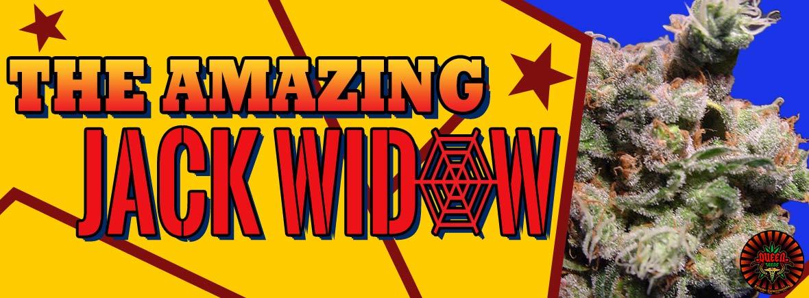 Jack Widow - Queen Seeds