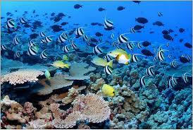 Nuevos refugios para proteger fauna marina