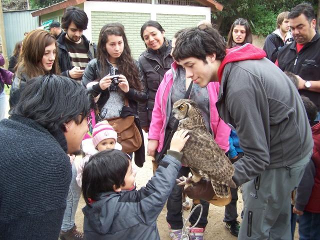 Octavo Festival de Aves en Viña del Mar