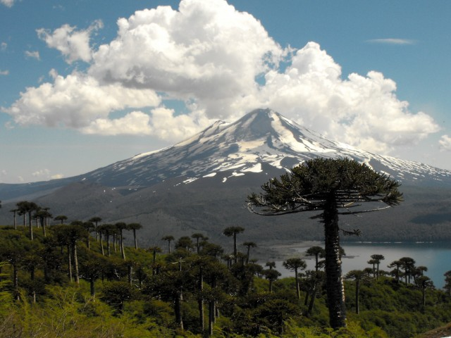 Parque Nacional Conguillío: el nuevo destino top del sur de Chile