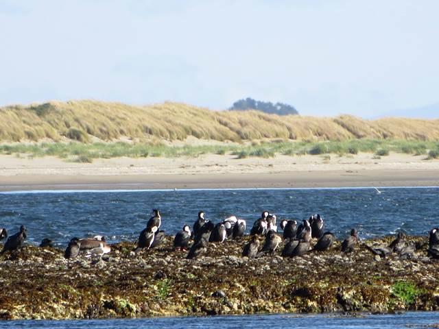 Maullín: un paraíso de las aves en Chile