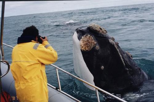 Parque Marino Francisco Coloane: En búsqueda de las ballenas en la Patagonia