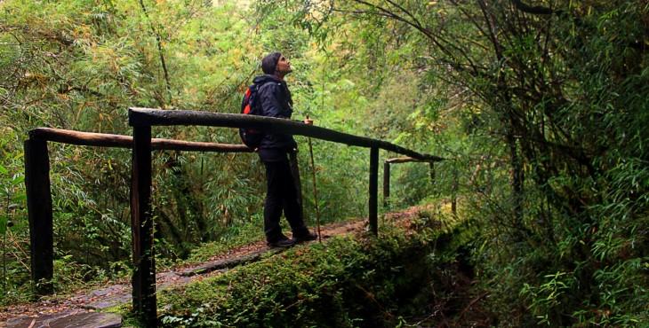 Parque Nacional Alerce Andino: Recorre sus senderos y maravíllate de sus paisajes