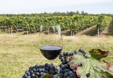 La viticulture raisonnée ou viticulture biologique