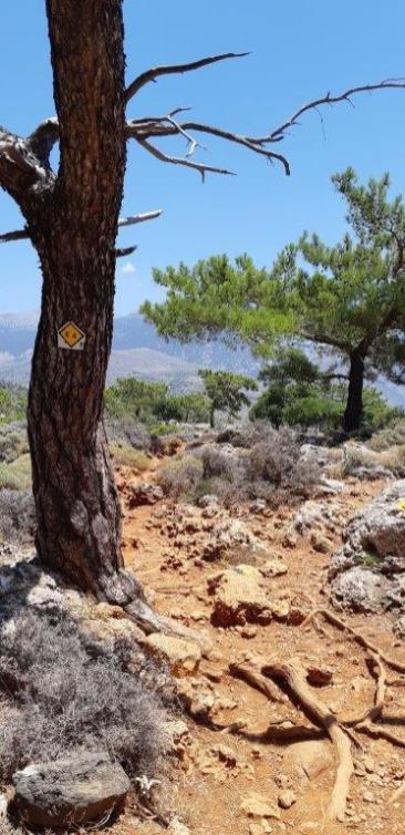 Randonnée vers le port antique de Lissos (Crète)