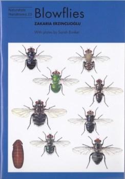 blowflies-erzinclioglu