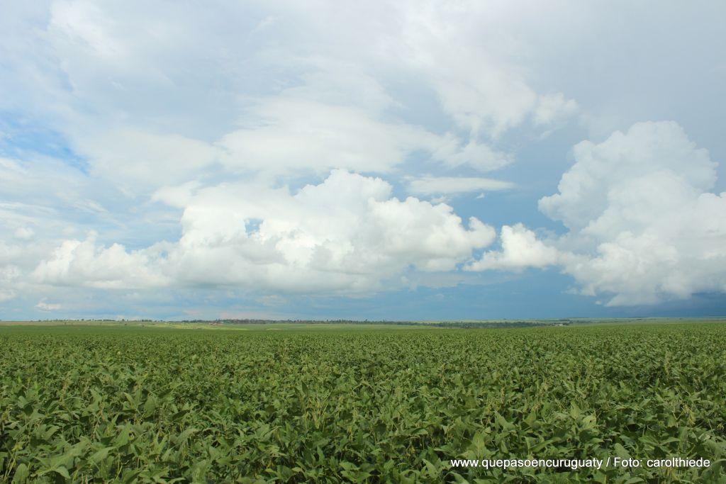 Plantación de soja mecanizada frente a las tierras de Marina kue. Diciembre de 2012, Curuguaty.