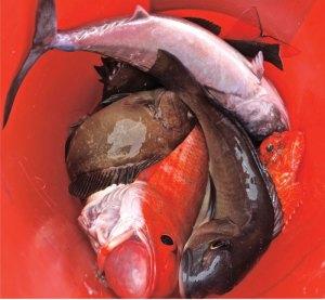 Bucket-o-fish