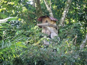 Macaw nesting box in a tree