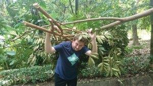 Tom gathering branches