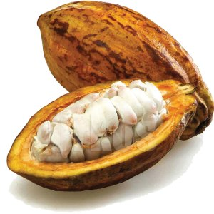 Cacoa seeds