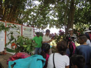 Introduction to the tree planting program