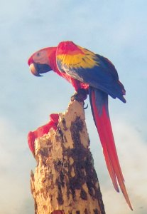 macaws return