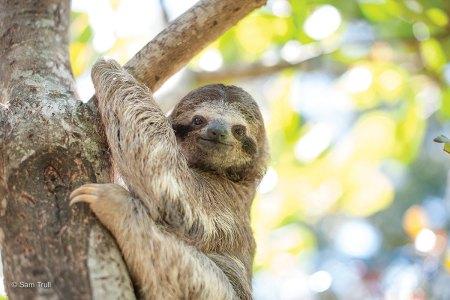 Moana on tree trunk